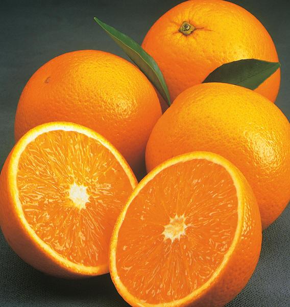 Valencia Orange Brite Leaf Citrus Nursery