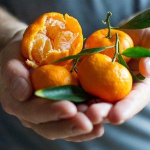 kishu-mandarin