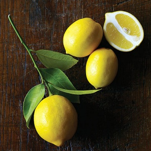 meyer-lemon-x