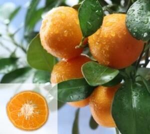 sunburst-tangerine