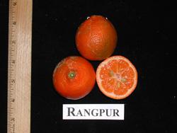 Rangpur4